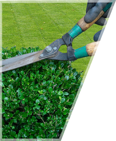 Couleurs Jardin - Entretien de jardin – Elagage & abattage – Déneigement – Vente de sapin de noël (en saison)